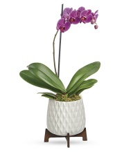 Geometrical Orchid Planter (New✔)