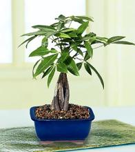 Fulfilling Fortune Money Tree (small)