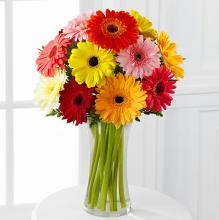 Colorful Worl Gerbera Daisy
